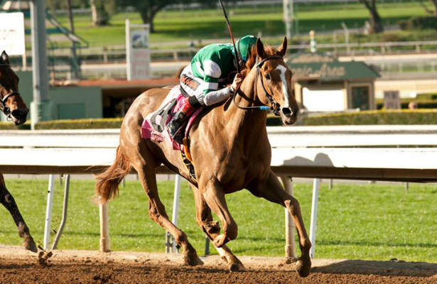 Eclipse Award 2015 Stellar_Wind_Santa_Ysabel_615x400_orig