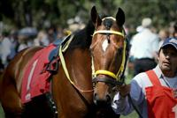 Storm Fighter in the paddock before his 1st 2014 win on 4/5/14