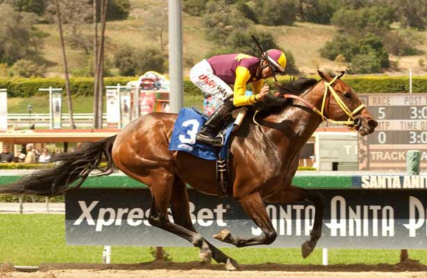 Storm Fighter wins 2014 Tiznow Stakes.
