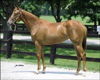 /horse/Sangher