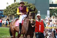 Sweet Factory leaving the paddock at Santa Anita for her career debut with Mike Smith.  She won at 17-1 odds