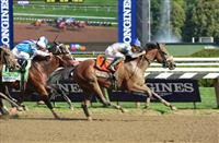 2014 Breeders' Cup Filly & Mare Sprint Contender: Sweet Reason