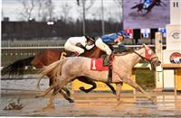 Sweetrayofsunshine wins at Laurel (12-18-16)