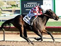 Taylors Deal Winning the Turf Paradise Derby