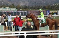 /horse/Woodmans Luck