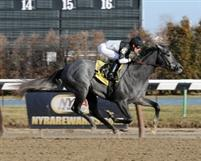The Lumber Guy winning his first race at Aqueduct on January 28, 2012.