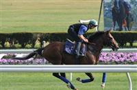 Toast of New York prepares for Belmont Derby (7-3-14).