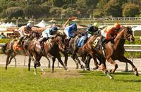 2014 Breeders' Cup Mile Preview
