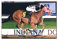 Unreachable Star, 2011 Indiana Bred Older Horse of the Year