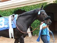 Valiant Effort at DelMar 2010