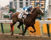 /horse/Venetian Way
