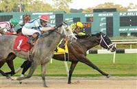 Kentucky Derby 2014: Handicapping the Tampa Bay Derby