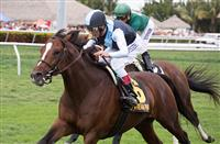 March 28, 2015: John Velazquez on War Correspondent wins the Appleton (G3T) at Gulfstream Park, Hallandale Beach (FL). Arron Haggart/ESW/CSM