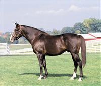 /horse/Wayne County