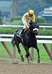 /horse/Wicked Diva