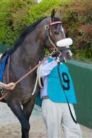 Win Willy before the Arkansas Derby