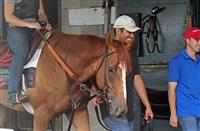 Wise Dan to Resume Galloping