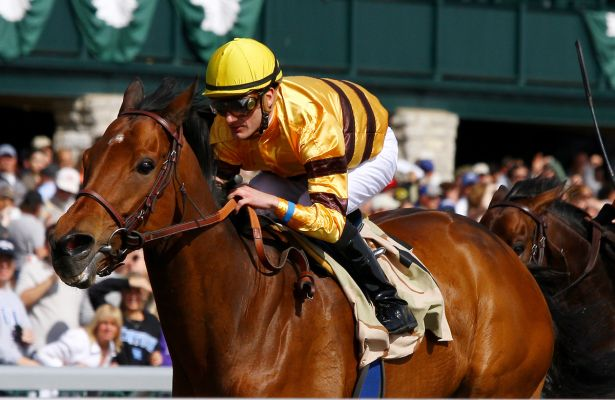 Wise Dan Maker's 615 X 400