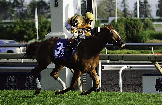 Wise Dan WM12 615 X 400