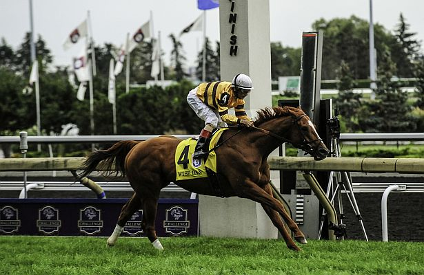 Wise Dan WM13 615 X 400