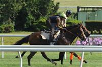 Xcellence prepares for Belmont Oaks (7-3-14).