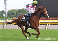 /horse/Rainbow Dahlia