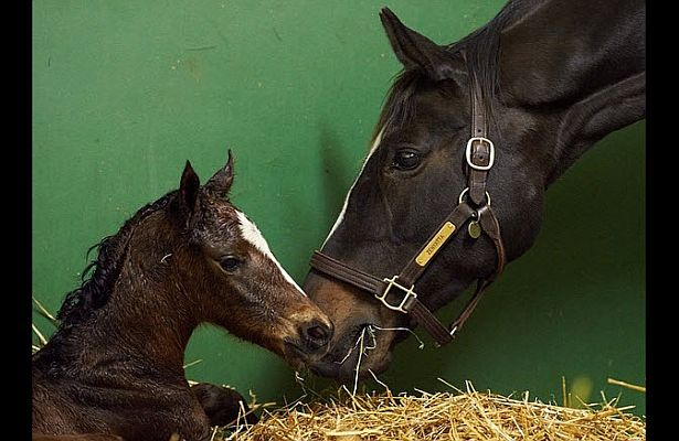 Zenyatta's Filly