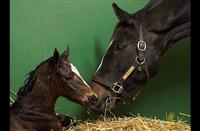 Zenyatta's third foal is a War Front filly