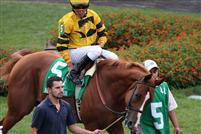 Backtalk before winning the 2009 Bashford Manor