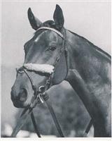 /horse/Challedon