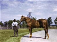 /horse/Man O War