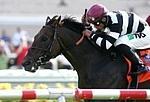 /horse/Champ Pegasus