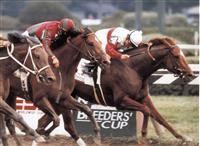 /horse/Coronados Quest