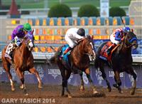 Bayern wins 2014 Breeders' Cup Classic