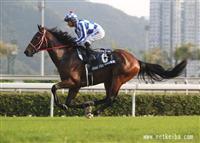 /horse/Grand Prix Boss