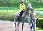 /horse/Best Cruise