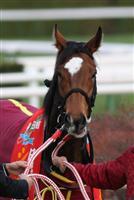 /horse/gentildonna