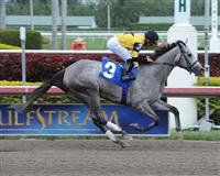 Flashy Gray wins an Allowance race at Gulfstream Park in 2013 with Joel Rosario.