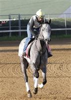 Flashy Gray gallops at Churchill Downs in preparation for the 2013 Kentucky Oaks.