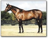 /horse/Halos Image