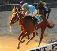 /horse/Haynesfield