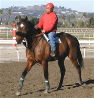 In training at San Luis Rey Downs