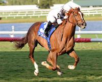 /horse/Joes Blazing Aaron