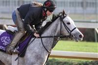 Joyful Victory works in preparation for The Breeders' Cup at Churchill Downs. 11.02.2010..photo Ed Van Meter