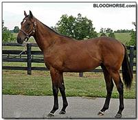 Lentenor:  Bloodhorse.com photo