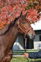 Stakes winner Maid Of Heaven at the Fasig-Tipton sale.