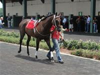 July 4, 2009: Martin's Bay in Louisiana Downs paddock.