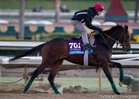 Mexikoma training at Santa Anita Park for the Breeders' Cup Juvenile.
