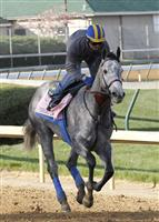 Midnight Lucky gallops at the Churchill Downs racetrack in preparation for the 2013 Kentucky Oaks.