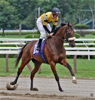 /horse/Montana Knight